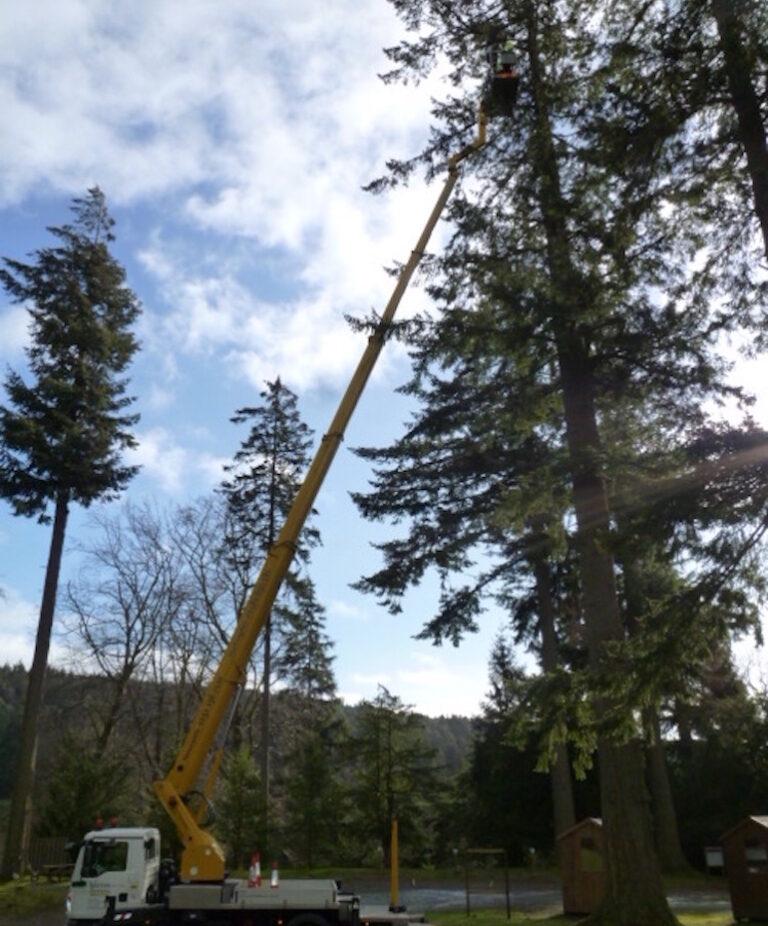 Tree work - 33m ruthmann T330 Truck Mounted Platform