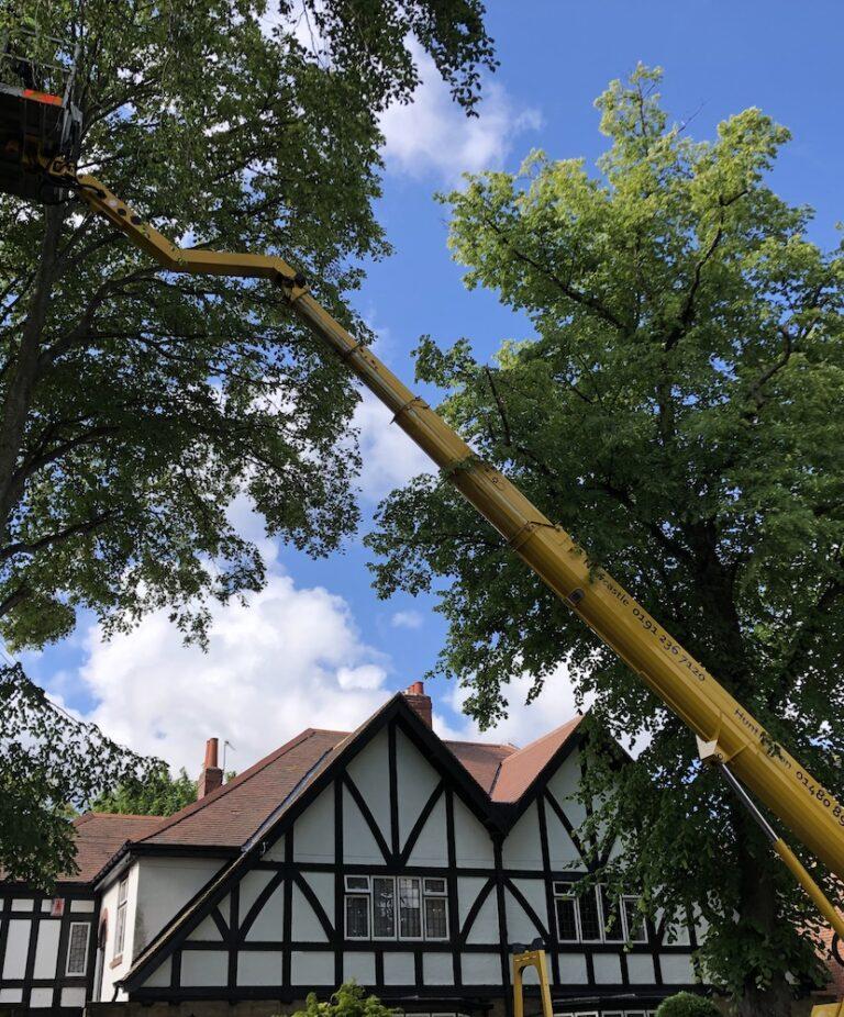 33m Ruthmann Tree Work