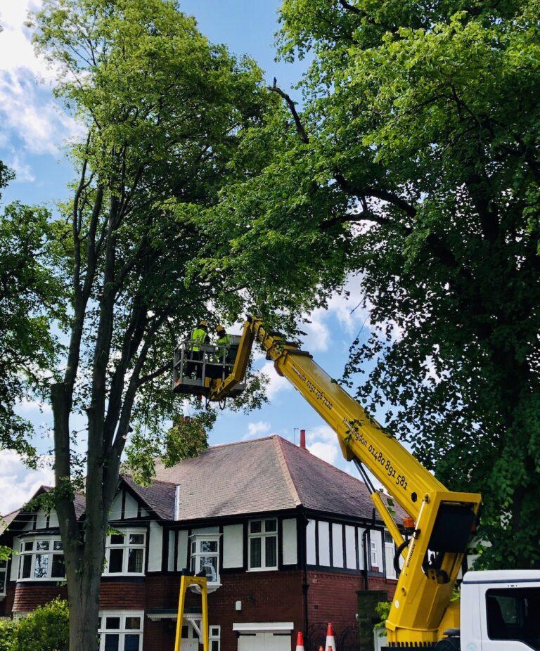 Tree Work - 33m Ruthmann