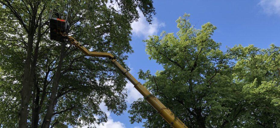 hiring a cherry picker from Warren Access - tree work with Ruthmann 33m truck mounted platform
