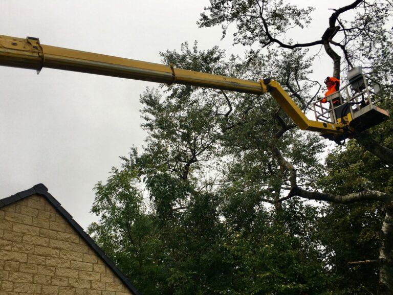 Warren Access - tree work in Newcastle